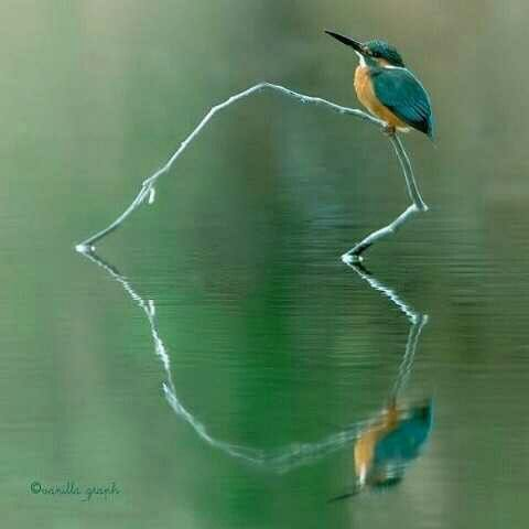Bird on a branch and the reflection makes a heart!