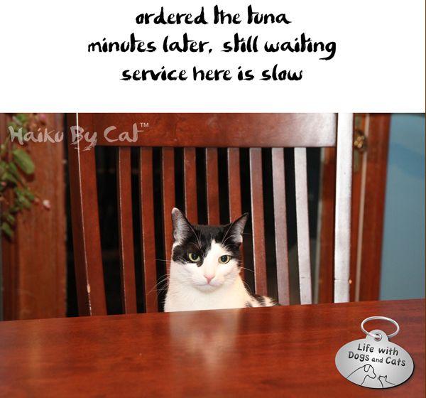 Haiku by Cat: Beware the Adorable Elsa Clair | Catster