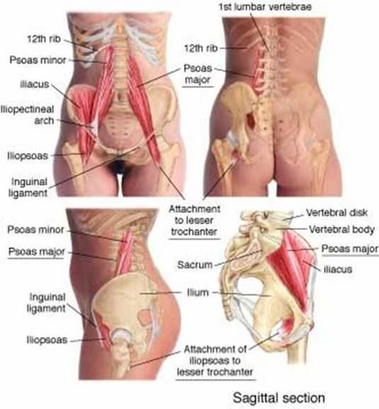 Pin by Mao Dun on ОДА | Pinterest | Hip pain, Anatomy and Therapy
