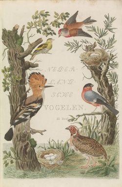 Nederlandsche vogelen, titelprent van deel 5 (1829) - Cornelis Nozeman & Jan Christiaan Sepp.