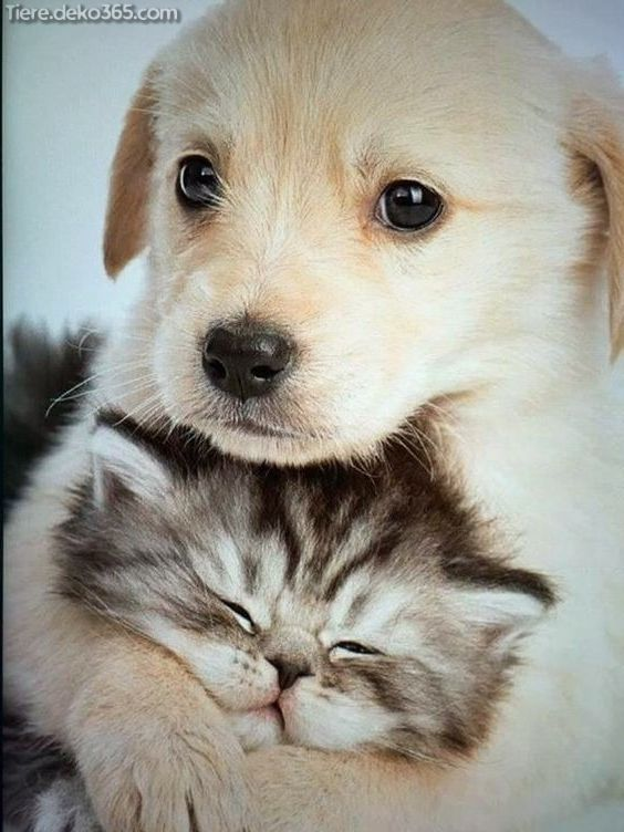 Ungewohnliche Freundschaften Mit Tieren Die Ihr Kardia Zum Schmelzen Einbringen Tiere Haustiere Lustige Haustiere