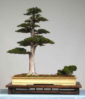 Yew Bonsai Simon Tremblett Indoor Bonsai Tree Bonsai Tree Types Bonsai Tree