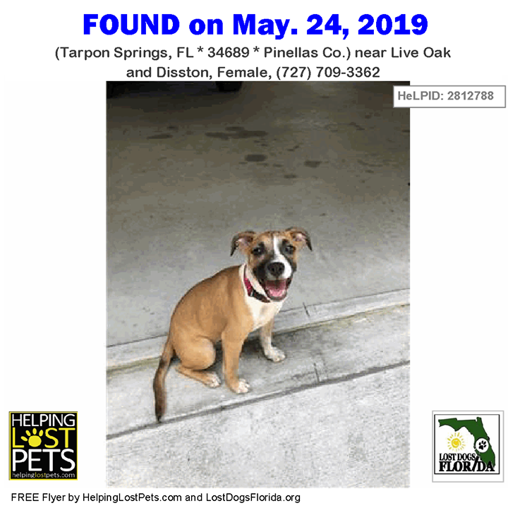 Found Dog Is This Your Lost Dog Or Do You Recognize Her Do You Know This Dog Tarponsprings Live Oak Disston Female 727 709 Losing A Dog Losing A Pet