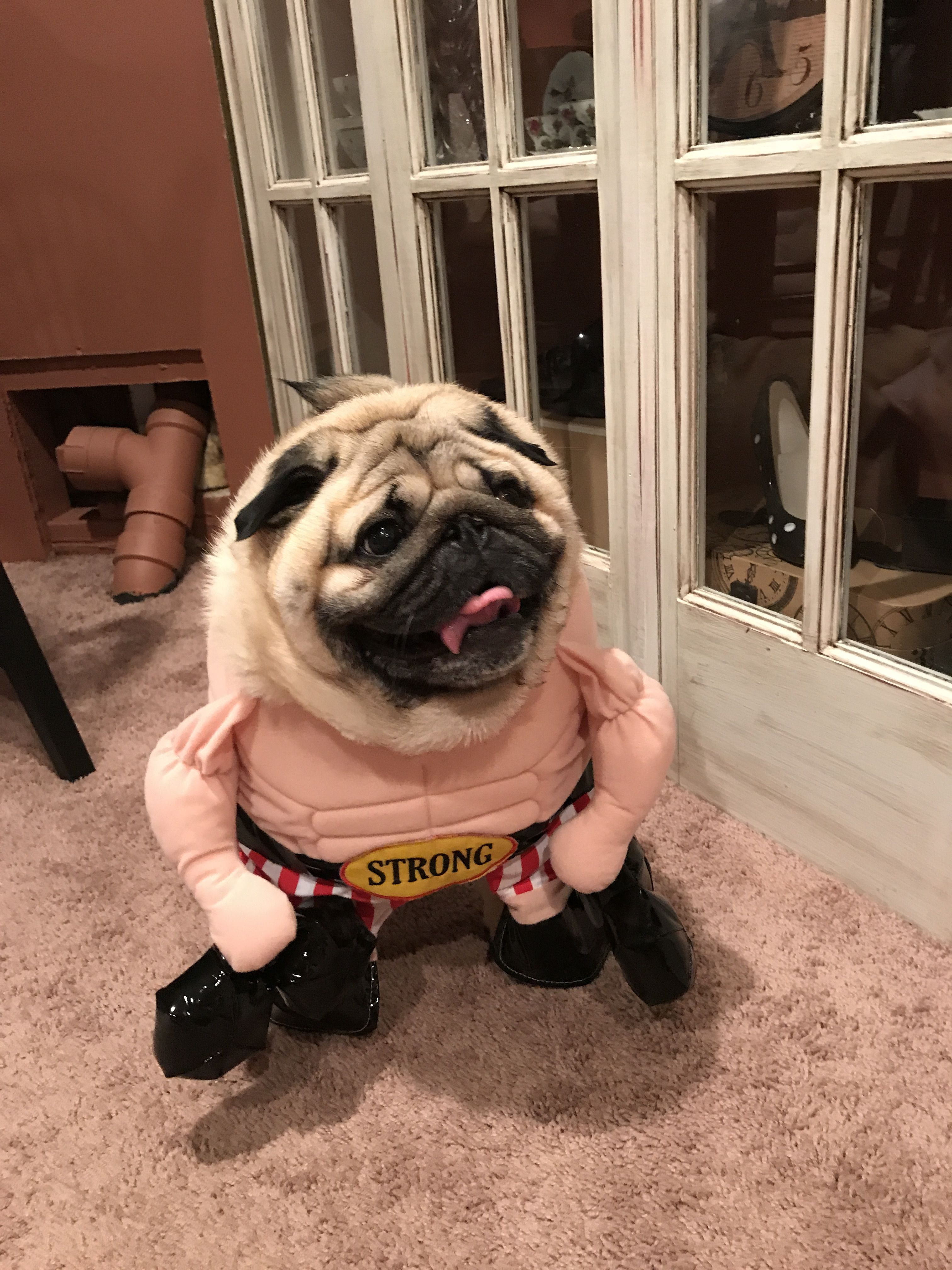 Pin by kim megens on animals pinterest animal funny pugs claire lovers friends animals animales animaux boyfriends animal thecheapjerseys Choice Image