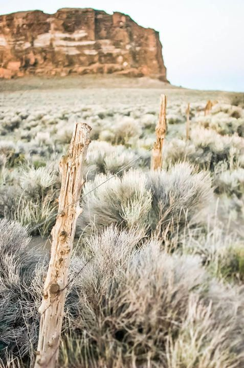 June 2012   Looking across the field of sage brush outside of Fort Rock in central Oregon.