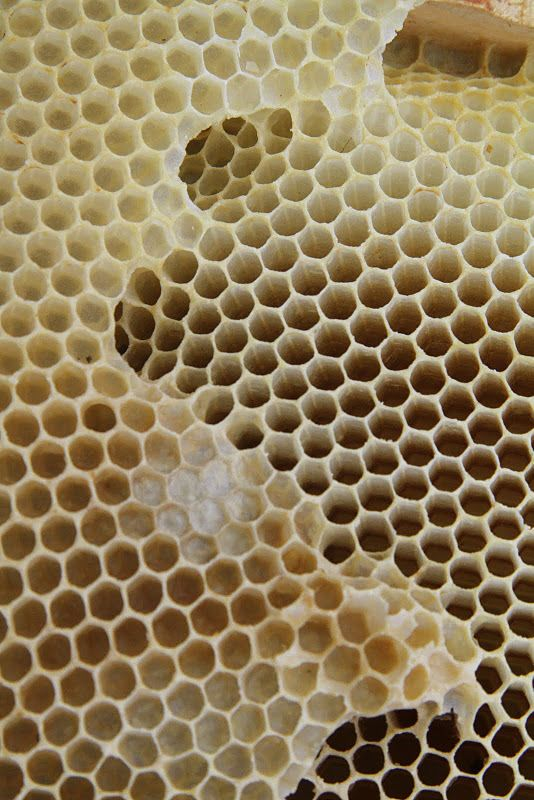 honeycomb makes me afraid, but it's still cool.