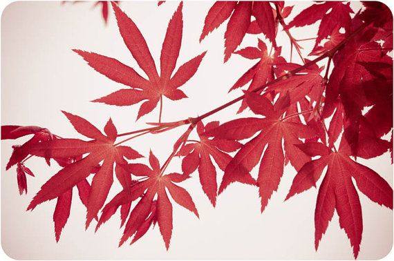 Home Decor Nature Photos Red Leaves 5 x 7 Vintage by FacingTheLens, $10.00