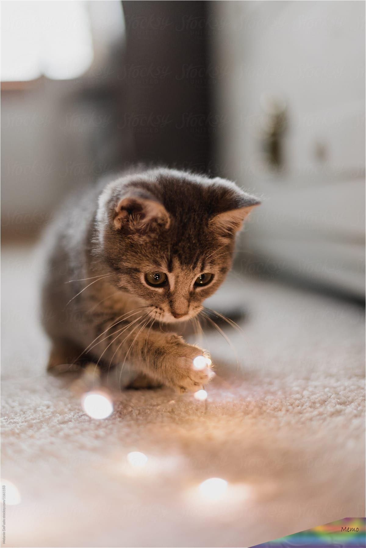 Oct 4 2019 A Cute Little Kitten Playing With Christmas Lights In 2020 Baby Cats Cute Animals Cute Baby Cats