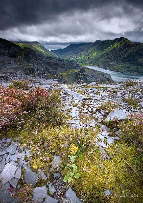 North Wales: Slate and Flowers. ❦ Blaenau Ffestiniog