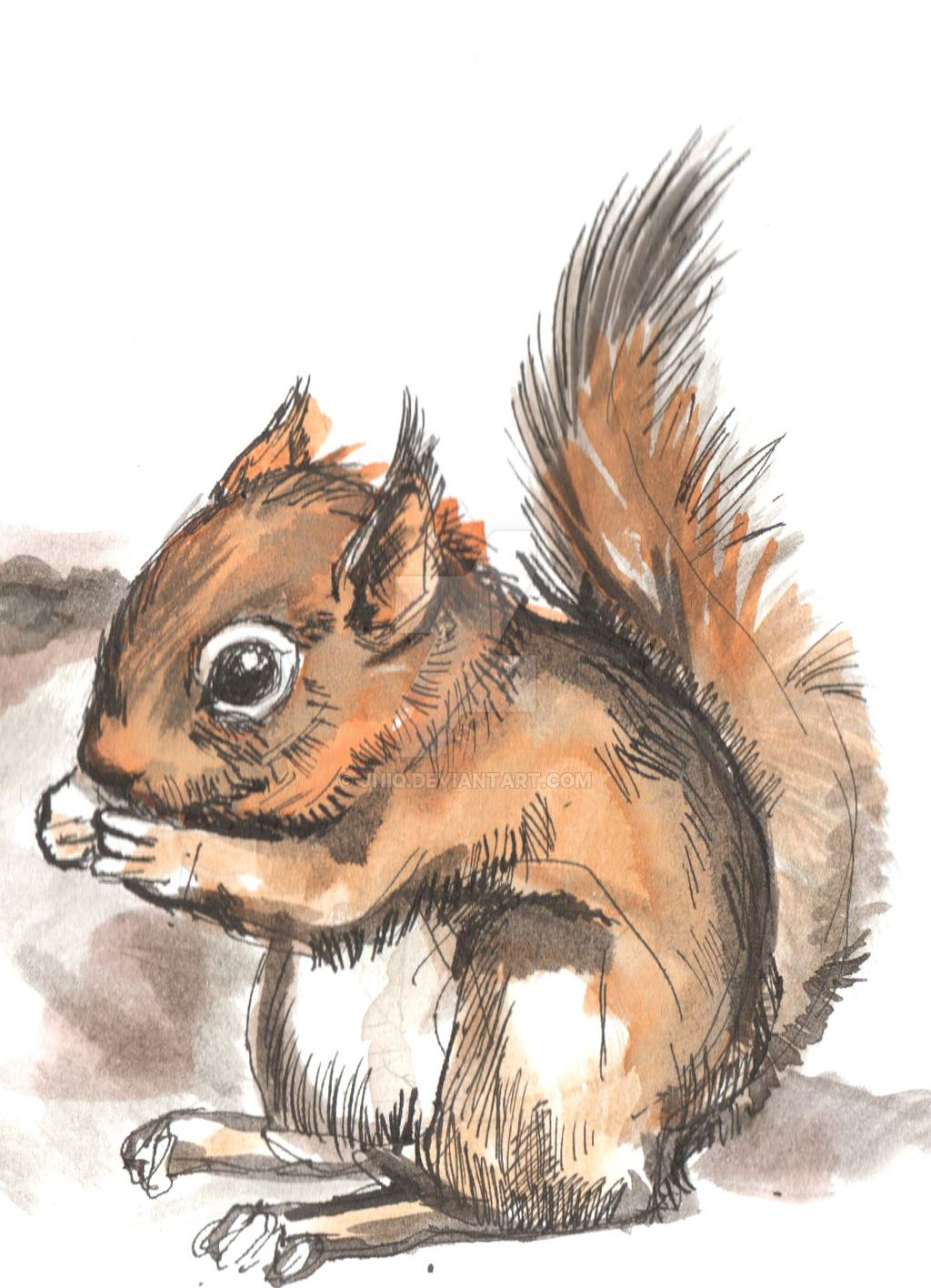 native squirrel line drawings google search line drawings