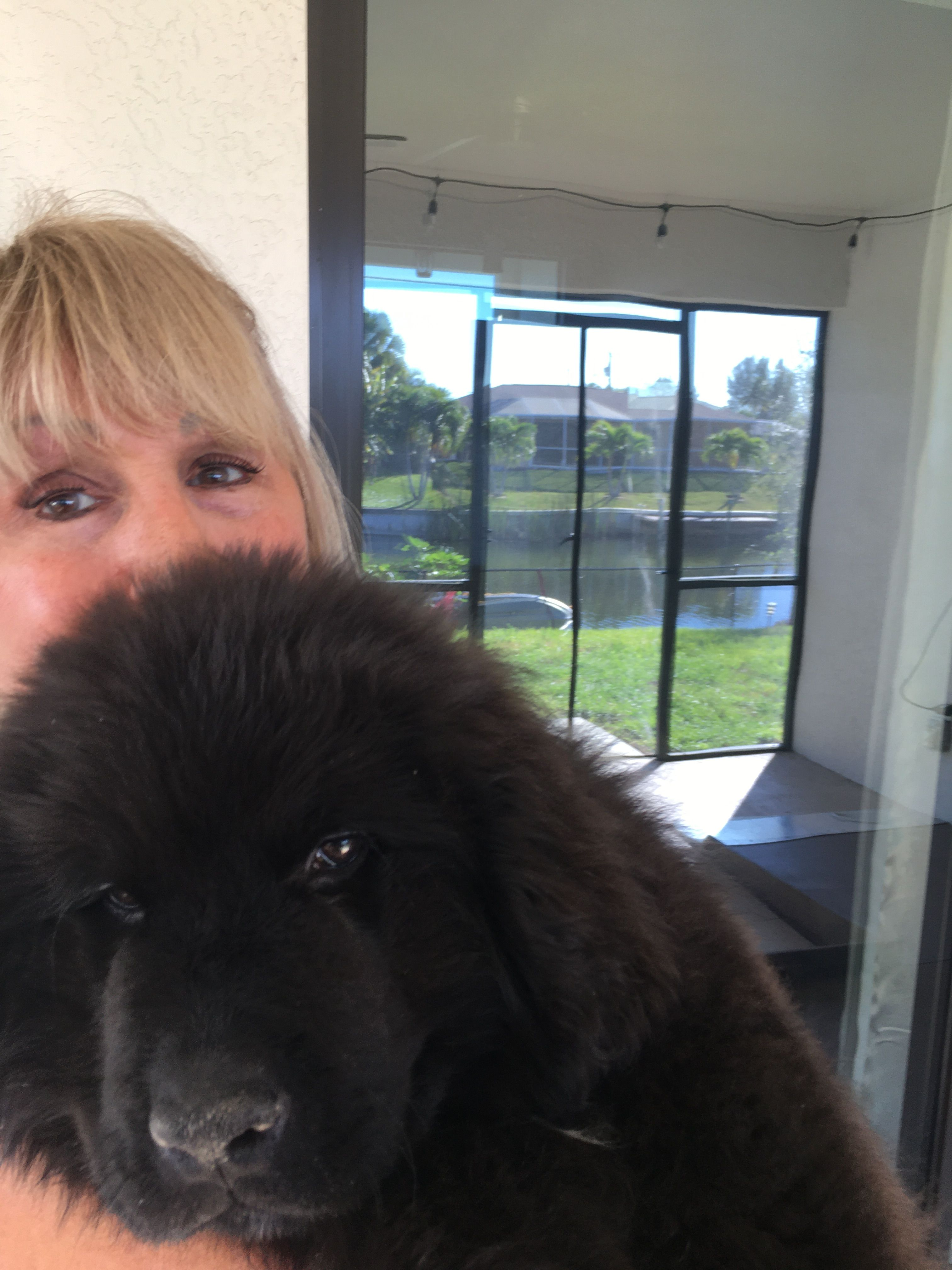 How Much Are Newfie Puppies Ideas