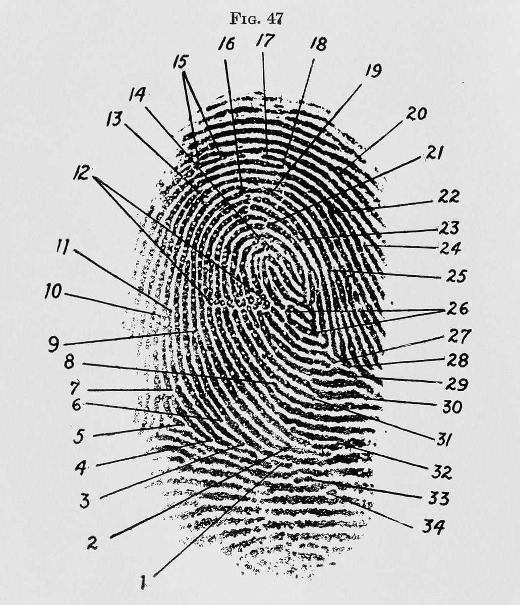 proof   evidence   fingerprint as a visual  this is a fingerprint diagram  1940  i like how it