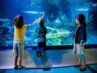 Sea Life Arizona in Tempe | Arizona - on FamilyDaysOut.com #tempe #arizona #sealife #zoo #kidsfun #family