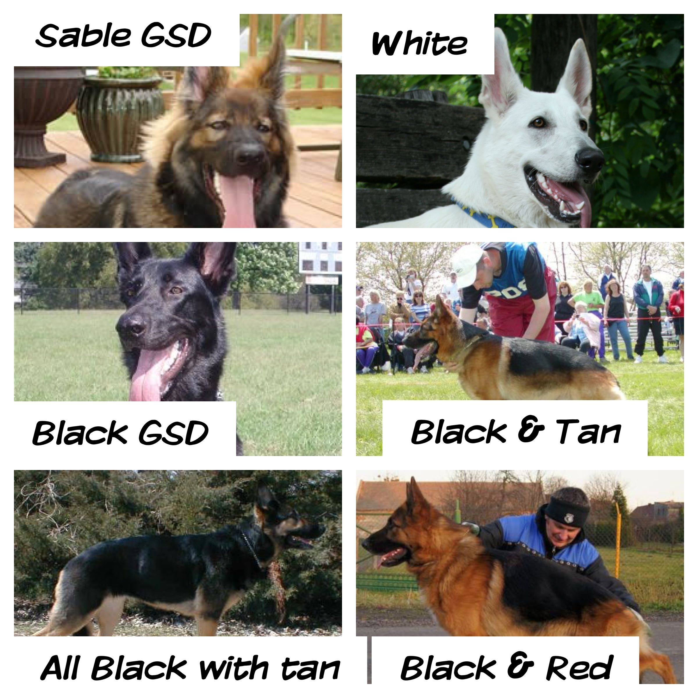 My color chart of gsd just german shepherds pinterest german dog my color chart nvjuhfo Images