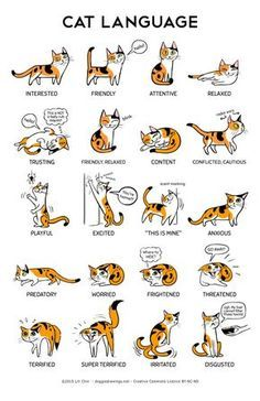 Cat Language Print