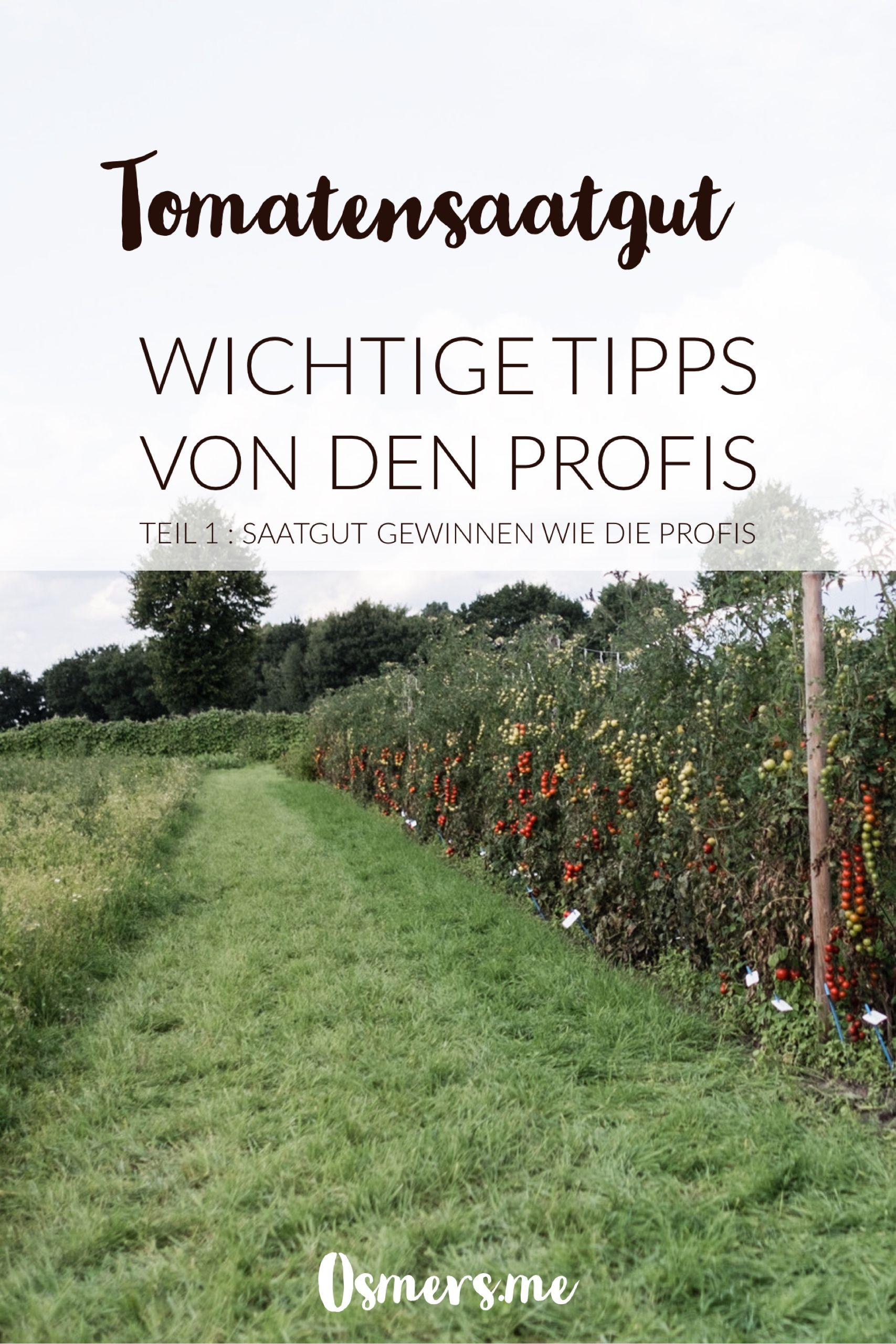 Tomaten Vermehren Pflegen Ernten Teil 1 Saatgutgewinnung Osmers Garten Garten Saatgut Garten Gestalten