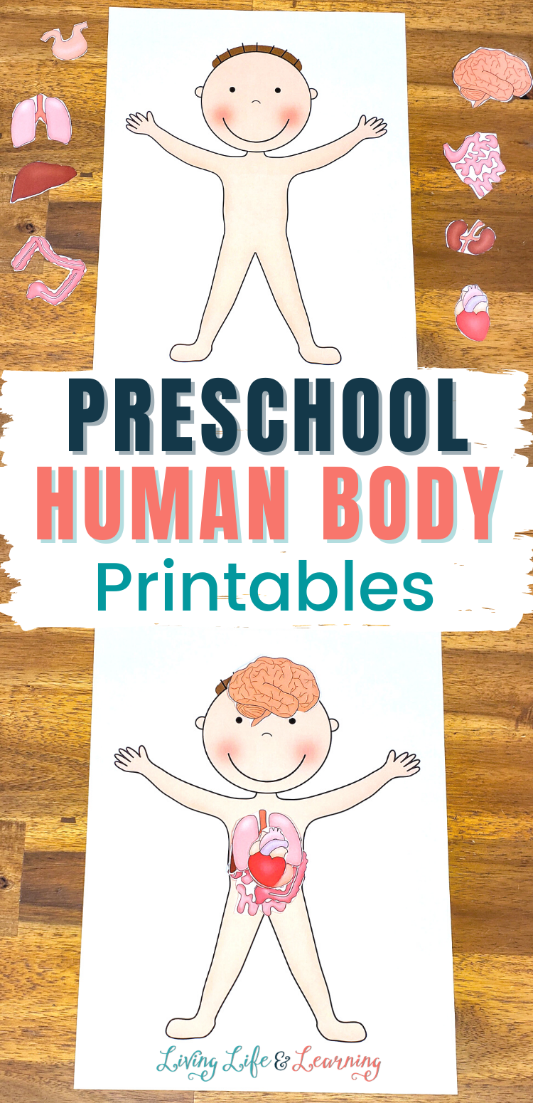 Preschool Human Body Printables Human Body Printables Human Body Activities Body Preschool [ 1550 x 750 Pixel ]
