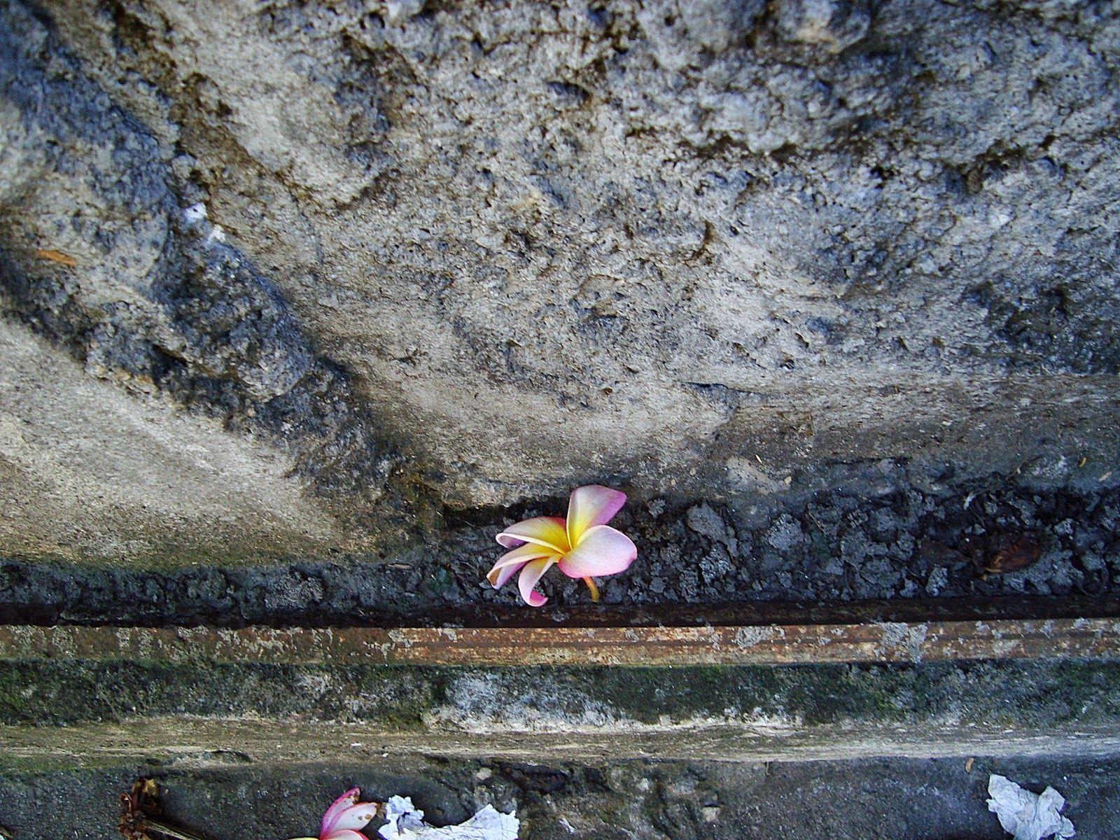 Photo amadora: flor no asfalto..