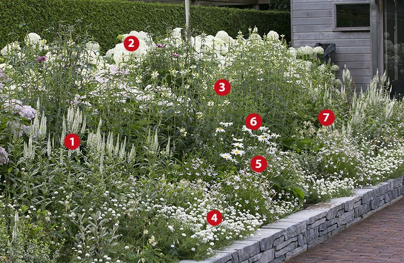 Wonderlijk Beplantingsplan voor een witte border | Tuin afbeelding, Hortensia NR-34
