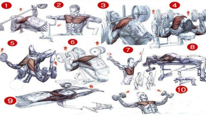 bodybuilding chest exercises chart: The best chest workouts begin with first understanding the