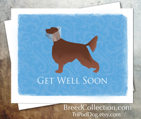 Irish Setter from the TriPodDog Breed Collection - Greetings Collection - Thank You, Get Well, Pet Sympathy and Thinking of You - set of 4