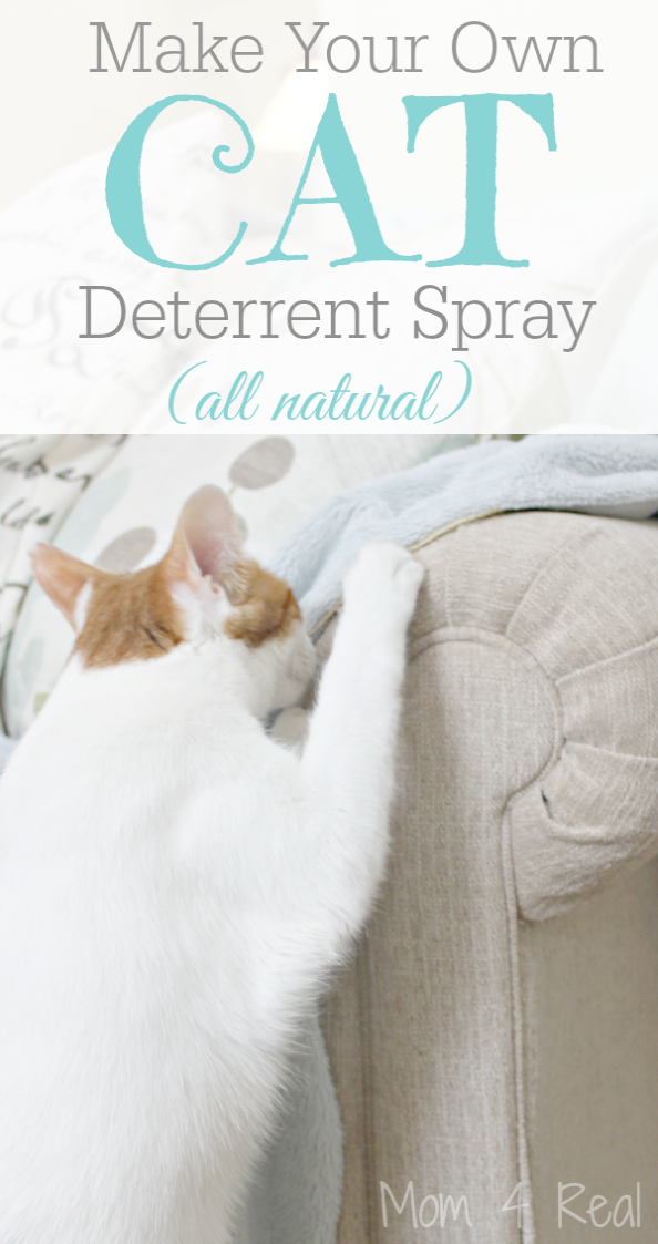 Cats And Kittens Cattery Ballina Cats And Kittens For Sale Leeds Cat Deterrent Cat Deterrent Spray Dog Deterrent