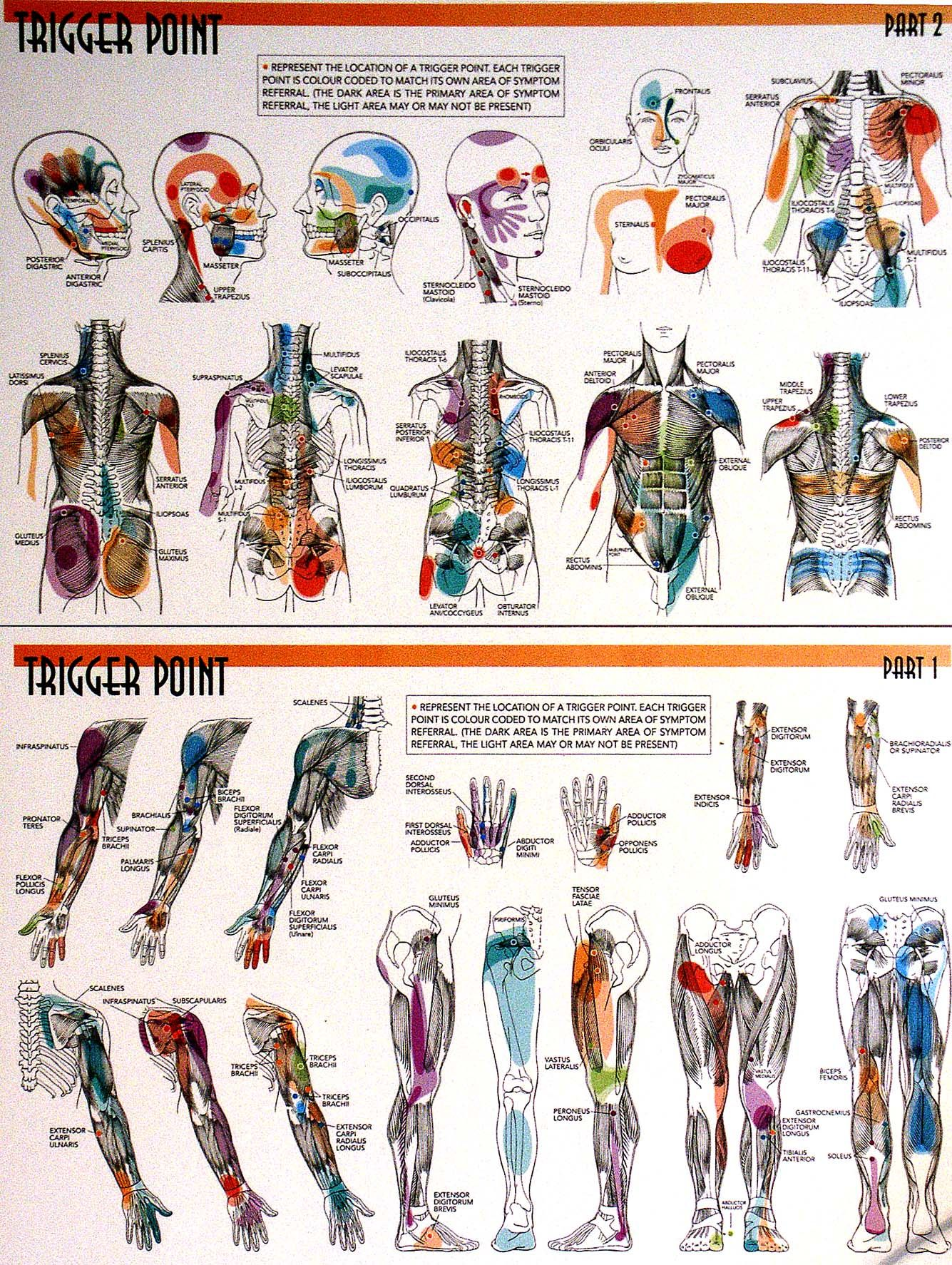 the trigger point manual pdf
