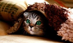 Cat Names City Female Male Popular Cool Cute Kitten Names Cute Cats Kittens Cutest