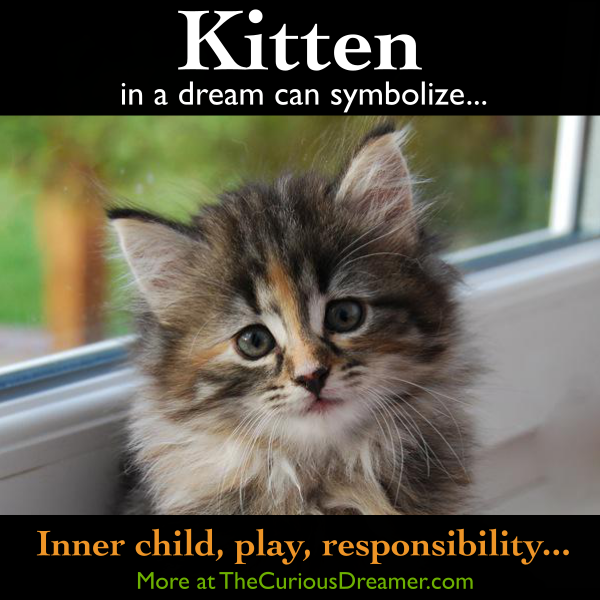 A Kitten As A Dream Symbol Can Represent More At The Free Dream Dictionary At Thecuriousdreamer Com And I Dream Symbols Dream Interpretation Dream Meanings
