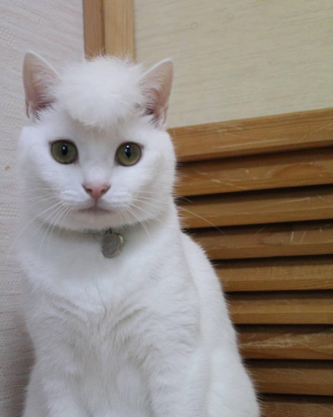 Shinbaba10 Tw Pleasantcats Kittens Cutest Baby Kittens Cats