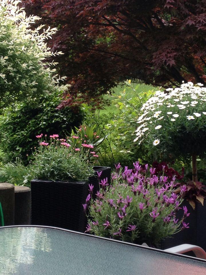 Terrassen Bepflanzung