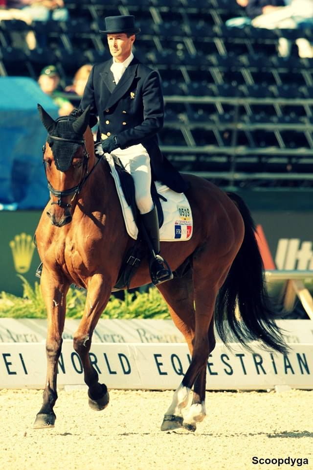 World Equestrian Games 2014 in Normandy. (France)