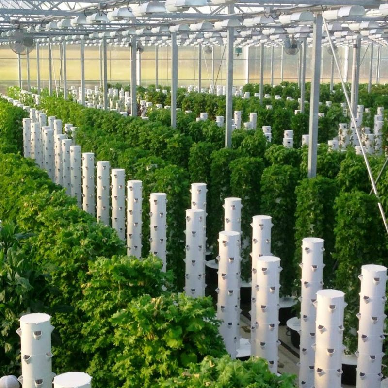 Commercial Greenhouse Packages