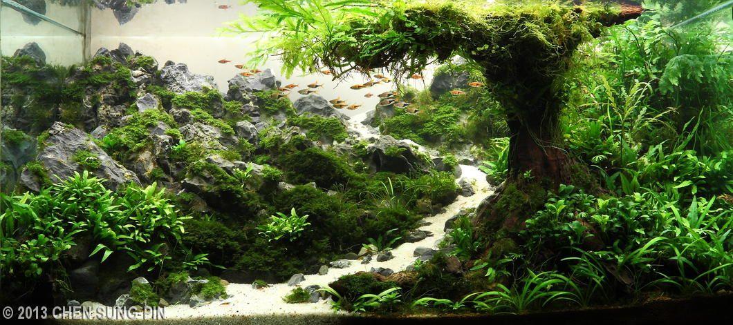 2013 aga aquascaping contest entry 339 plants for Petit aquarium