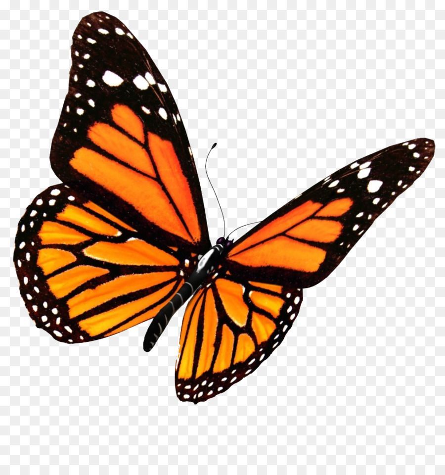Google Image Result For Http Clipart Library Com Images K Butterfly Png Transparent Butterfly P Monarch Butterfly Tattoo Butterfly Clip Art Monarch Butterfly