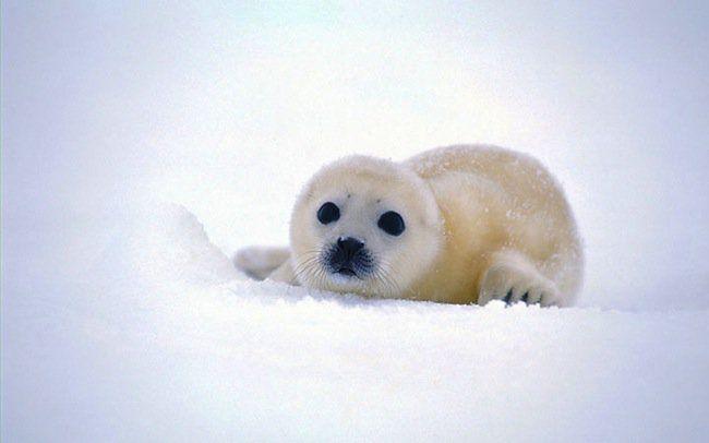 Les animaux les plus mignons du monde