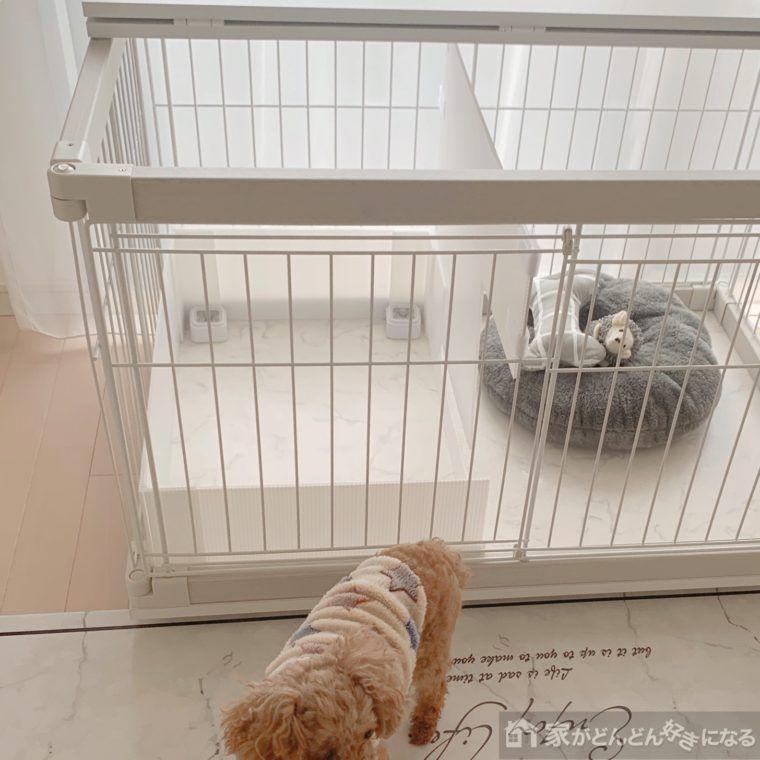 プラダンで犬のトイレに囲いを手作り トイレシートのズレ防止アイデアも 家がどんどん好きになる 整理収納 Diy 生活便利アイテム 犬のトイレ 犬のケージアイデア プラダン