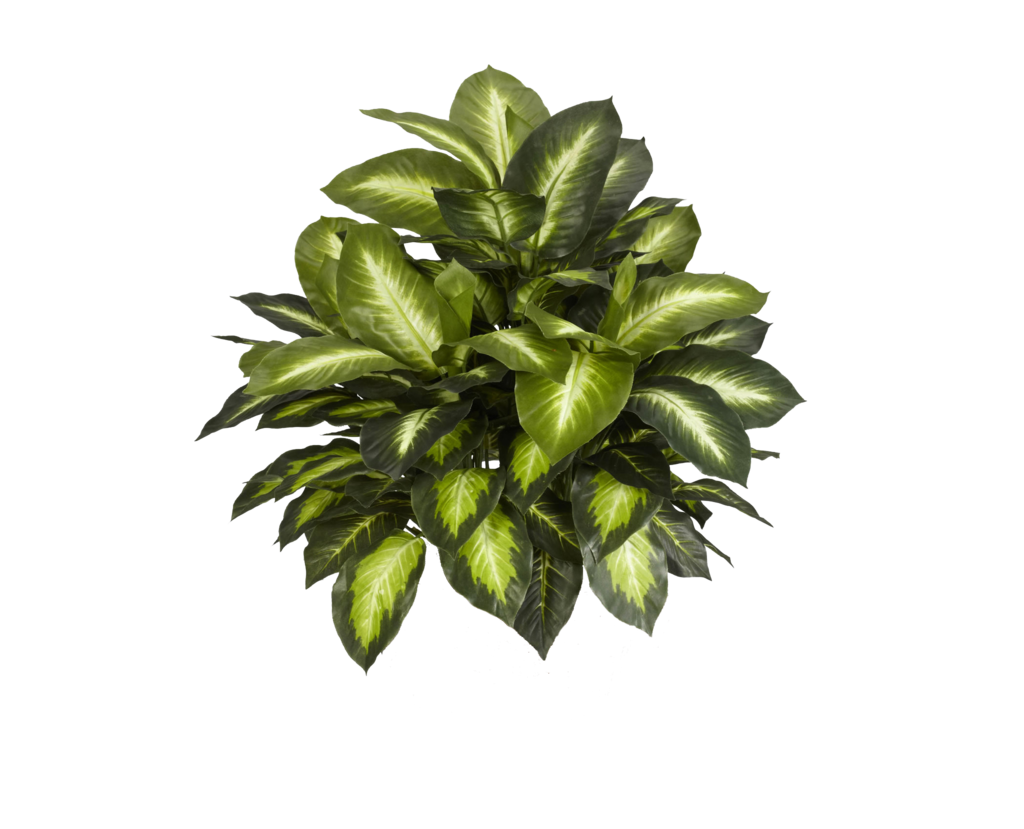 Nearly Natural 6639 Golden Dieffenbachia Decorative Silk Plant Green A Delightful Collection Of Color Variation Dark Emerald Hues Mixed With Lighter