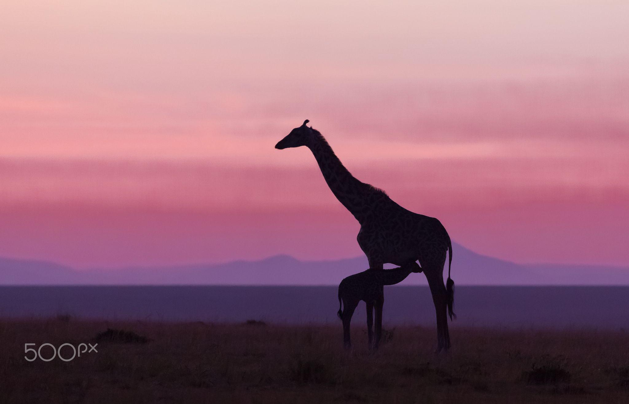 Good Morning Masai Mara 6 By Libor Ploček On 500px