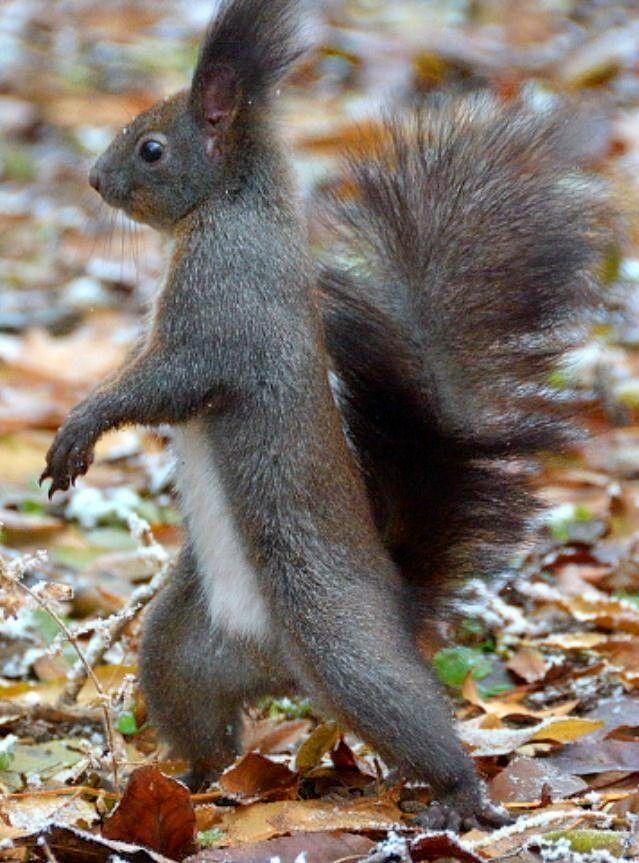 What Do Squirrels Like to Eat?   Squirrels Feeding - Anifa Blog