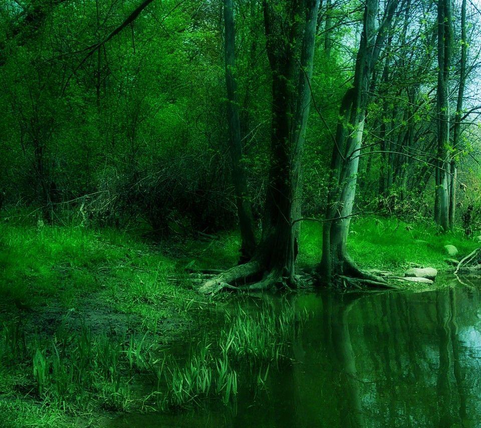 緑の深い森 Androidスマホ用壁紙 森の壁紙 深い森 おしゃれな壁紙背景