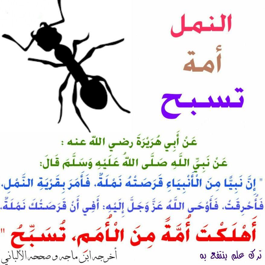 النمل أمة تسبح Islamic Quotes Islam Facts Learn Islam