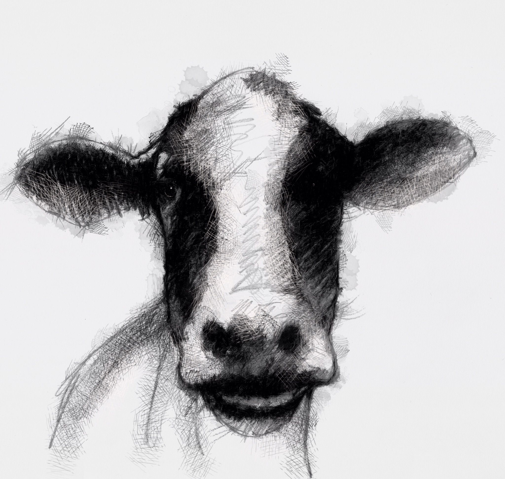 One Of My Sketch A Day Drawings Dairy Cow Cattle Drawing