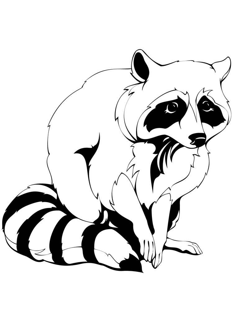 Raccoon Coloring Page Preschool Raccoons Are Small Mammals That Live In North America Central America South America And Sever In 2020 Mammals Raccoon Coloring Pages
