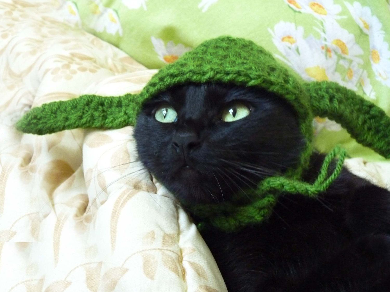 OMG Zoey would look so adorable is this...as she was running away from home in sheer disgust. Crochet Yoda Hat for Pets. $12.00, via Etsy.