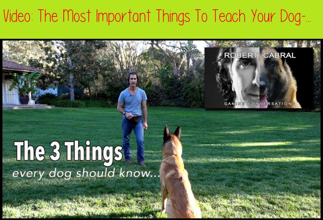 The Most Important Things To Teach Your Dog Robert Cabral Dog