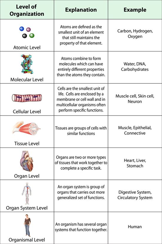 Level of Organization | The Human Body | Pinterest | Organizations ...