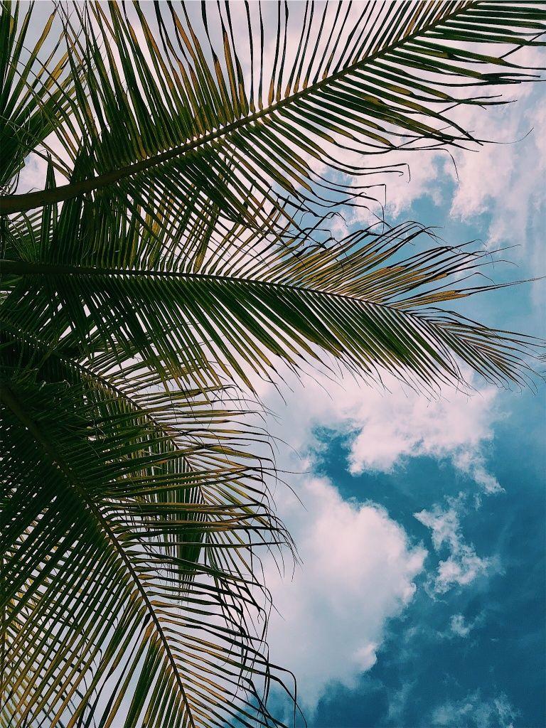 Photo By Michela Fusco Vsco Http Vsco Co Vsco Palm Summer Aesthetic Sky Blue Cute Cloud Fun Sky Aesthetic Aesthetic Wallpapers Photo