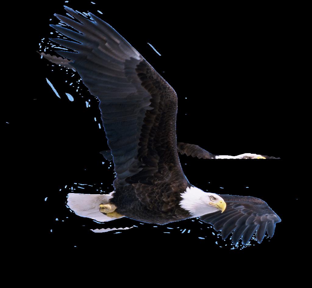 Eagle Skull Eagle Bird Png