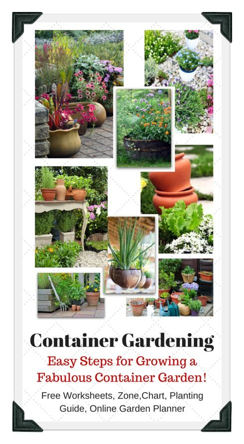 Lots of fun container gardening examples and ideashelpful tips